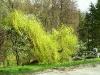 Parcul Băile Govora
