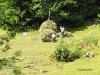 Oameni muncind in Valea Ariesului
